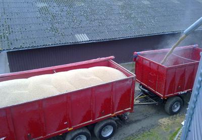 Laesning-af-korn
