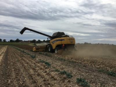 Spinat høst