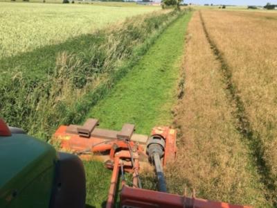 Slåning af kanter i græsfrøet