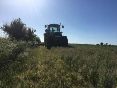 Slåning af kanter i frøgræsmarkerne for at undgå fremmet græs