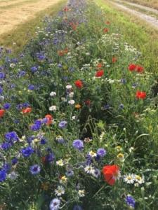 Blomster stribe fra DLF